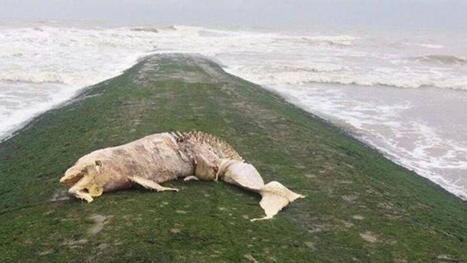 Dode dolfijn aangespoeld in Middelkerke