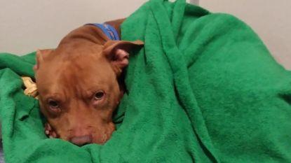 VIDEO. Deze hond werd aan zijn lot overgelaten door zijn baasjes. In het asiel wil hij niet gaan slapen voor hij ingestopt is