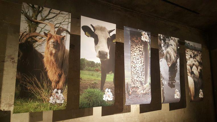 Drenthe's 'Big Vief'. Beeld Rosa Dietz