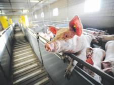 Nog geen barrière tegen grote veestallen in Apeldoorn