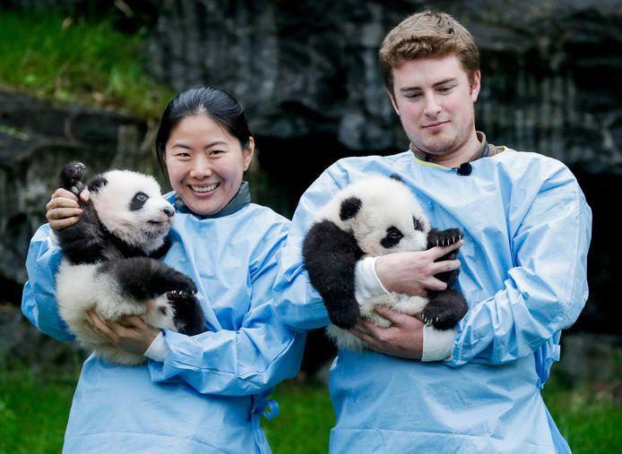 """Le mâle et la femelle avaient été provisoirement baptisés """"Baby Boy"""" et """"Baby Girl"""". Ils s'appelleront désormais """"Bao Di"""" et """"Bao Mei"""""""