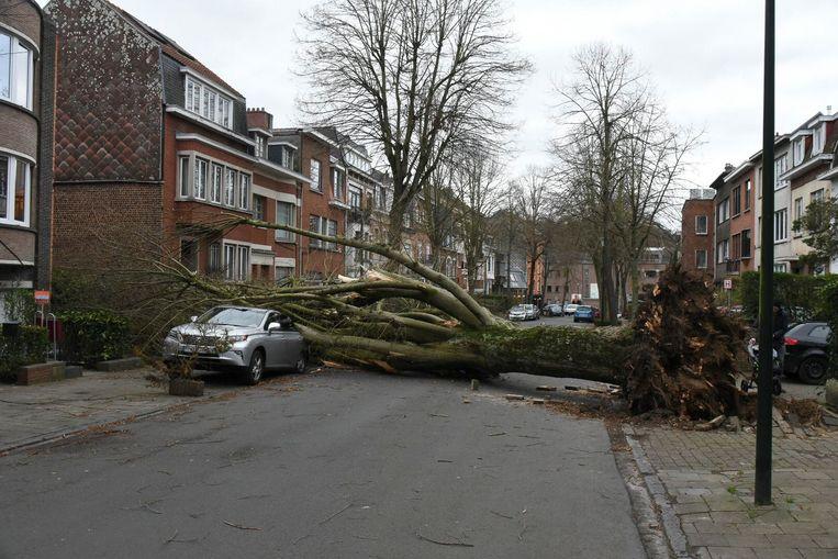 Illustratiebeeld van de stormschade veroorzaakt door storm Ciara.