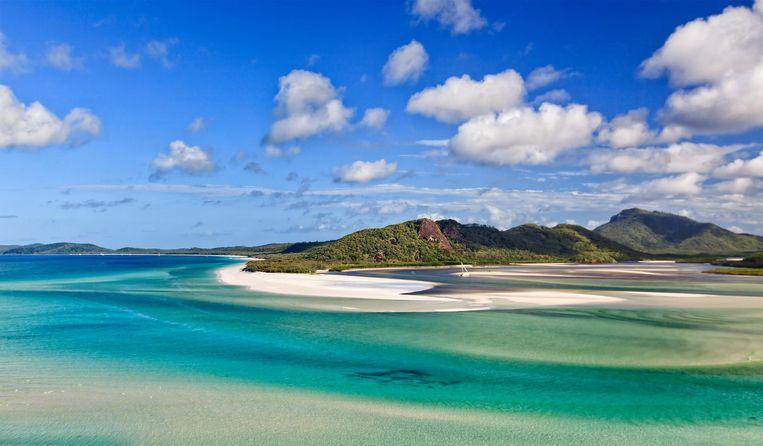 De omgeving van de Whitsundayeilanden, die centraal liggen in het bekende Great Barrier Reef, is de habitat van verschillende soorten haaien.