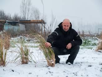 """Net 40.000 tulpen geplant, maar eigenaar maakt plots einde aan Bloemenplukweide van Ben (37): """"Droom die stopt, maar we geven niet op"""""""