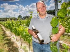Waarom Brabantse wijn nu wél lekker is