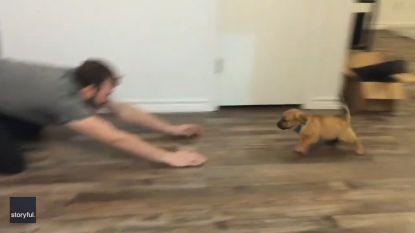 VIDEO. Energieke puppy krijgt maar niet genoeg van grappig spelletje