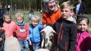 Kinderen knuffelen lammetjes in het Prinsenpark
