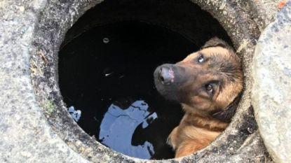 Ontroerende beelden: dierenorganisatie redt achtergelaten hond uit waterput in Dinant