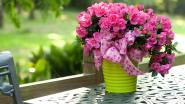 Zottegem steunt Plantjesweekend Kom op tegen Kanker
