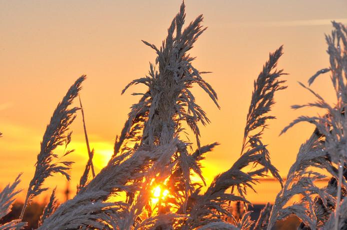 een mooie zonnige en koude berijpte zondagochtend in z.o. Brabant met lichte vorst