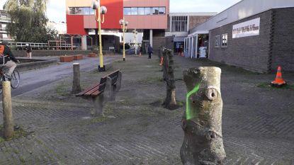 Vreemd zicht aan CC in Strombeek: gemeente laat 14 bomen kappen