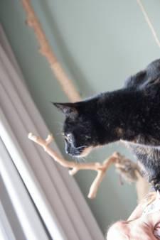 Gemist? Vermiste katten, een gevonden kat en commotie in de speeltuinen