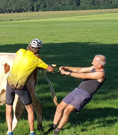 In je wielertenue een koe helpen bevallen: oud-dierenarts Jaap de Boer deed in Noordijk zijn noaberplicht