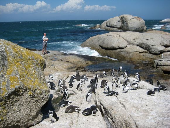 Boulders Beach in Zuid-Afrika.