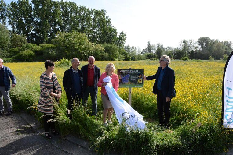 Het saaie grasland is in de Florimond Van Goeylaan een kleurrijke bloemenweide geworden.