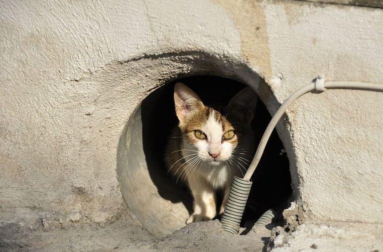 De stad Harelbeke lanceert een voederpas voor zwerfkatten. Enkel wie zo'n pas heeft, mag zwerfkatten eten geven.