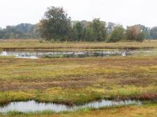 Puzzelen met kwelwater: Natuurontwikkeling in de Westelijke Langstraat