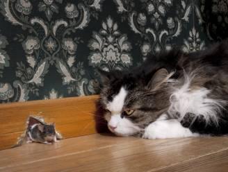 Huiskat maakt meer buit dan baasje denkt