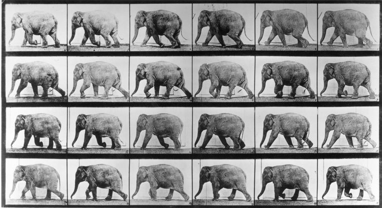 Edward Muybridge's bewegingsstudie uit 1887. Beeld Getty Images