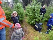In het Groesbeekse bos kun je zelf je kerstboom zagen
