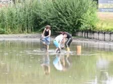 Kinderen en ouders redden vissen uit vijver in Etten-Leur
