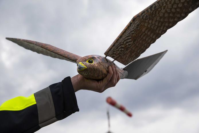 Twentse Robird voortaan schrik van vogels bij Edmonton International Airport.