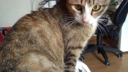 """Beringse al anderhalf jaar hopeloos op zoek naar Perzische kattin: """"Gered van een Iraanse steniging"""""""