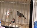 Verschillende soorten vogels te bezichtigen in Duiven.