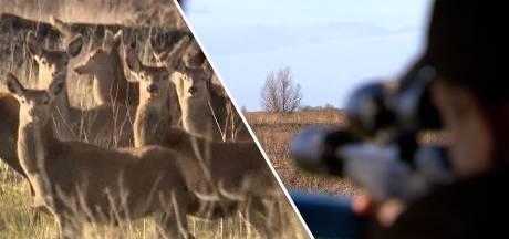 Rechter verbiedt afschot van herten in Oostvaardersplassen