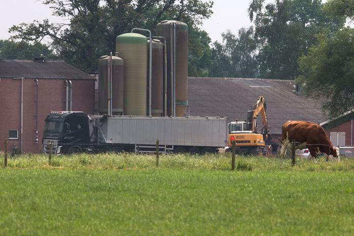 Met een kraan worden de kadavers van de dode varkens in Meddo in een vrachtwagen geladen.