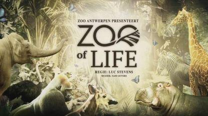 Zoo Antwerpen valt in de prijzen met spektakelmusical