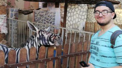 Is dit wel een zebra? Egyptische zoo blijkt niet helemaal eerlijk te zijn