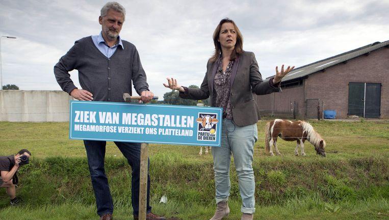 PvdD-lijsttrekker Marianne Thieme protesteert tijdens haar verkiezingscampagne samen met Harry Voss tegen de komst van megastallen. Beeld ANP