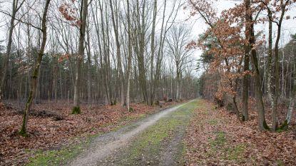 Werkgroep maakt plan op voor beheer van bossen Schoonbeek