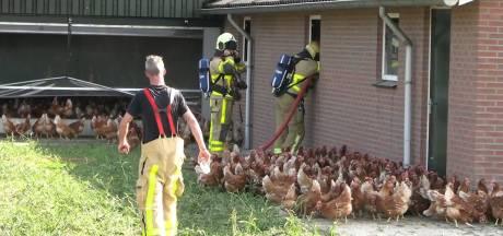 Overlevende kippen opgevangen bij collega na brand in Beltrumse schuur; oorzaak vuur blijft mysterie