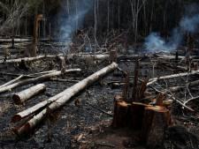 Grote zorgen over 'internationale crisis' Amazone