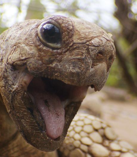 Brit redt leven van schildpad met mond-op-mondbeademing
