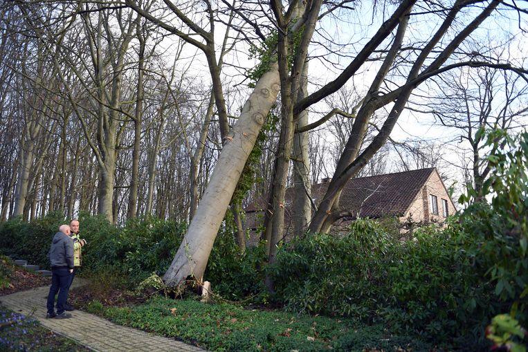 Storm over Leuven.Boom dreigt op huis te vallen in Linden