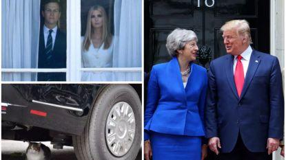 Kat van Downing Street slaat weer toe en Camilla grijpt haar kans: de grappigste momenten van Trumps bezoek aan de UK
