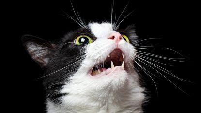 Kat wordt gekidnapt, ontvoerders eisen losgeld en laten daarna niet meer van zich horen