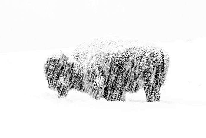 'Snow Exposure', Yellowstone National Park, VS. Winnaar in de categorie Black and White.