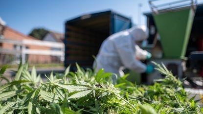 Waterdruppels leiden politie naar cannabisplantage met 800 planten
