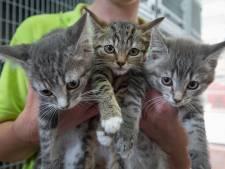 Ex-werknemers dierenasiel gaan voor doorstart: 'in Kampen moet weer een asiel komen en blijven'