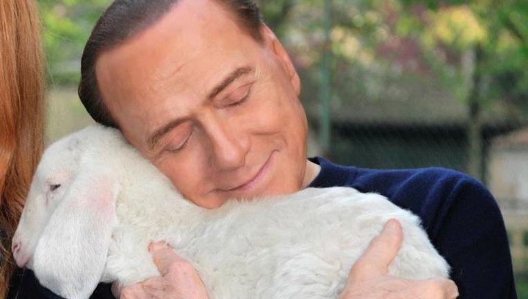 Berlusconi profileert zich nu als dierenvriend. Beeld null