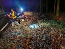 Wild zwijn aangereden op N224 in Ede