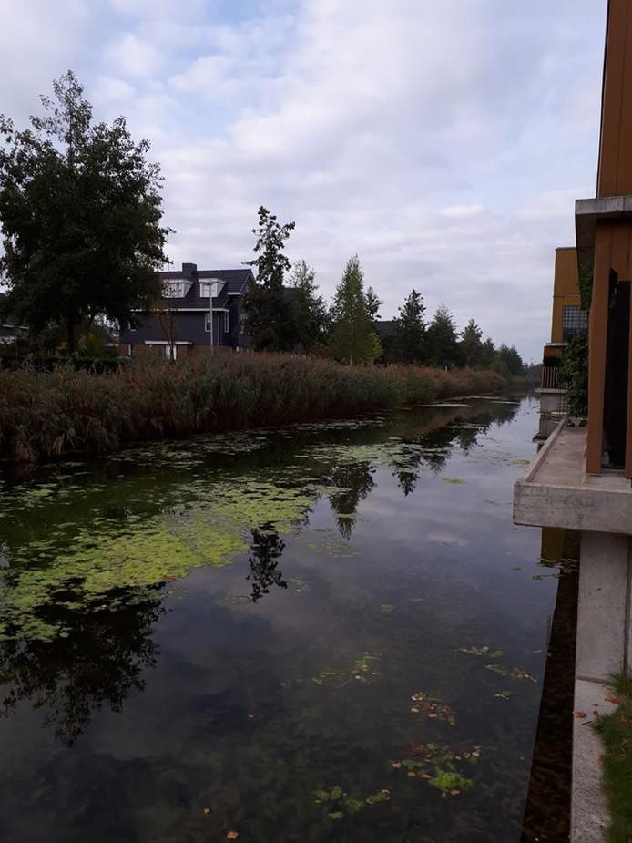 Het water waar de verdachte zich schuil hield tussen het riet.