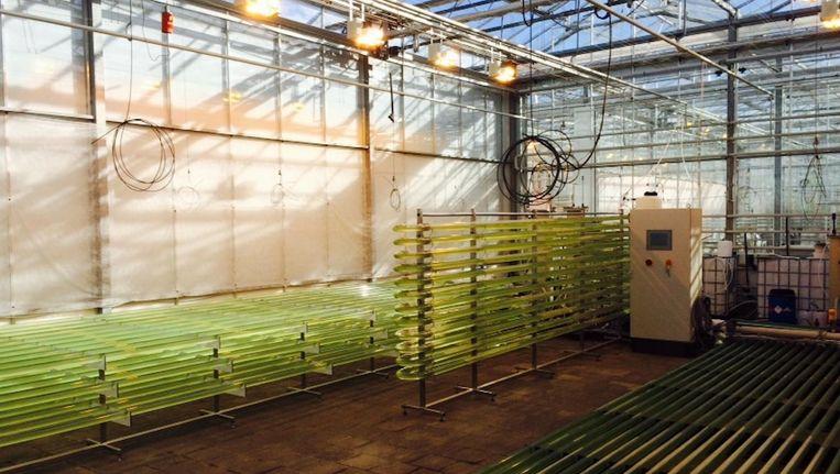 Photanol bouwt met AkzoNoble een demonstratiefabriek in Delfzijl Beeld Photanol
