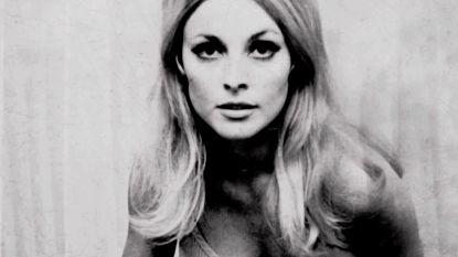 50 jaar nadat ze op gruwelijke wijze vermoord werd: wie was Sharon Tate?