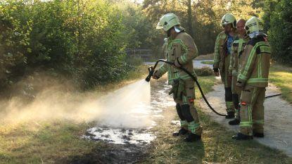 12 brandweermannen uit Maldegem mogen Nationale Orden ontvangen