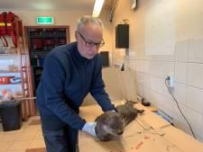 Natuurmonumenten eist actie van Alphen na doodgereden otter